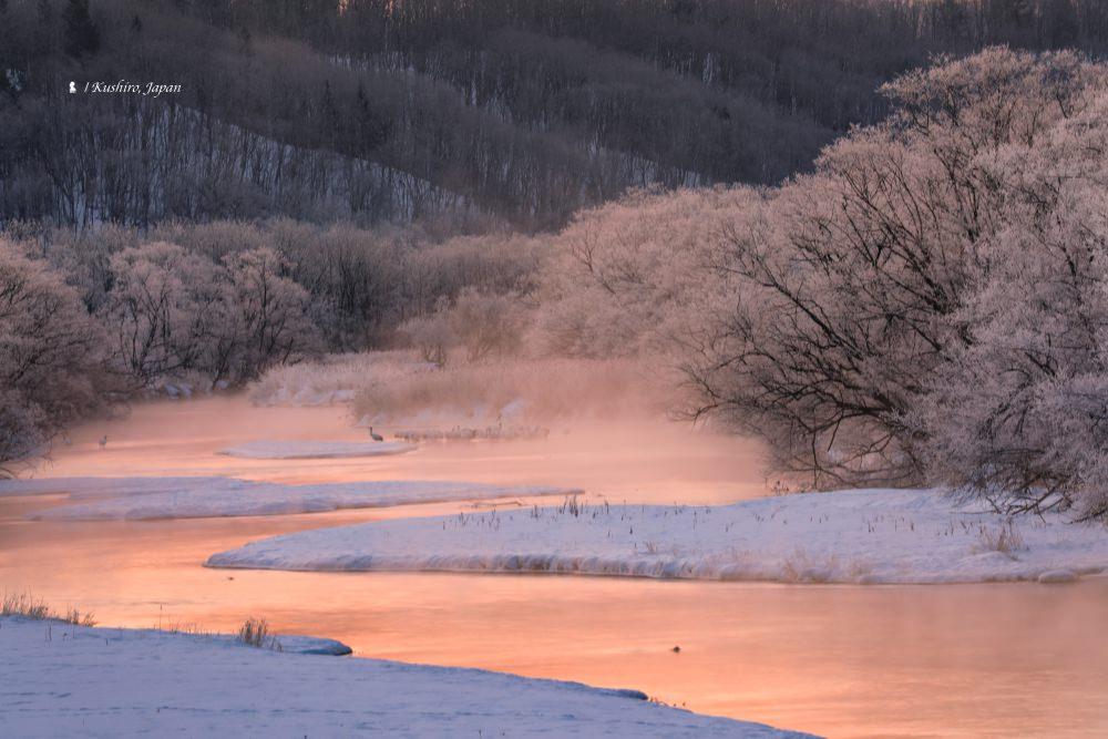 美拍丹頂鶴  北海道釧路 Top 3 拍攝地點攻略