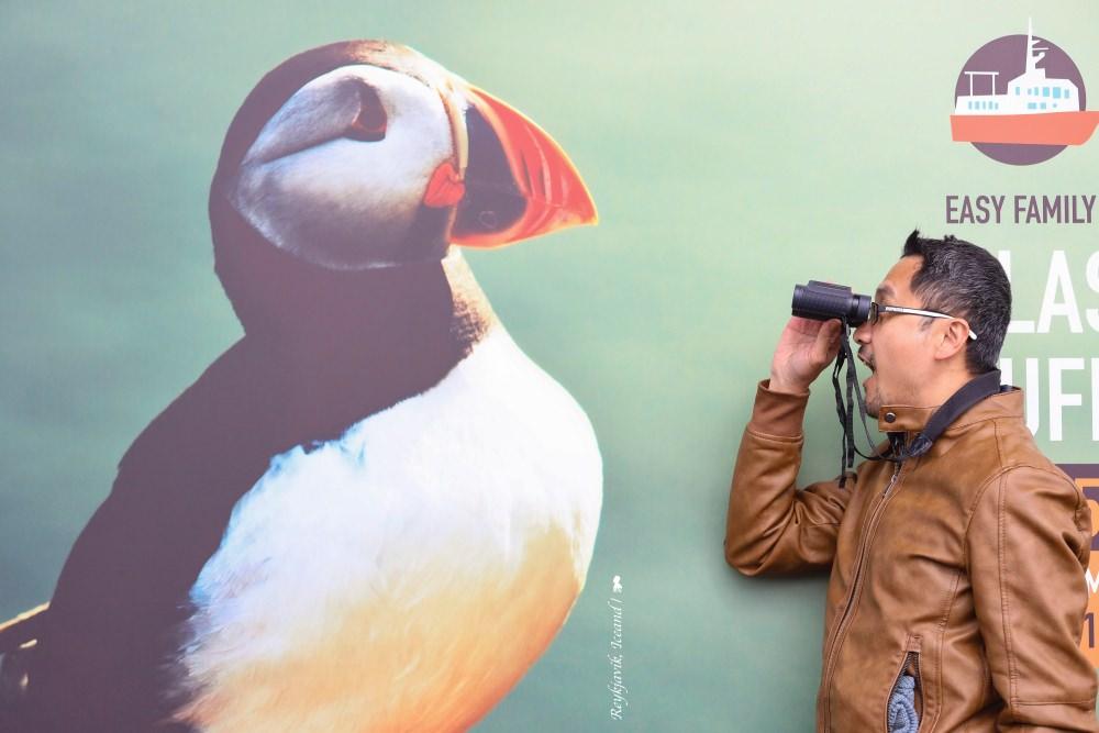 冰島最萌夏季限定活動,出海看苦情逗趣的 Puffin