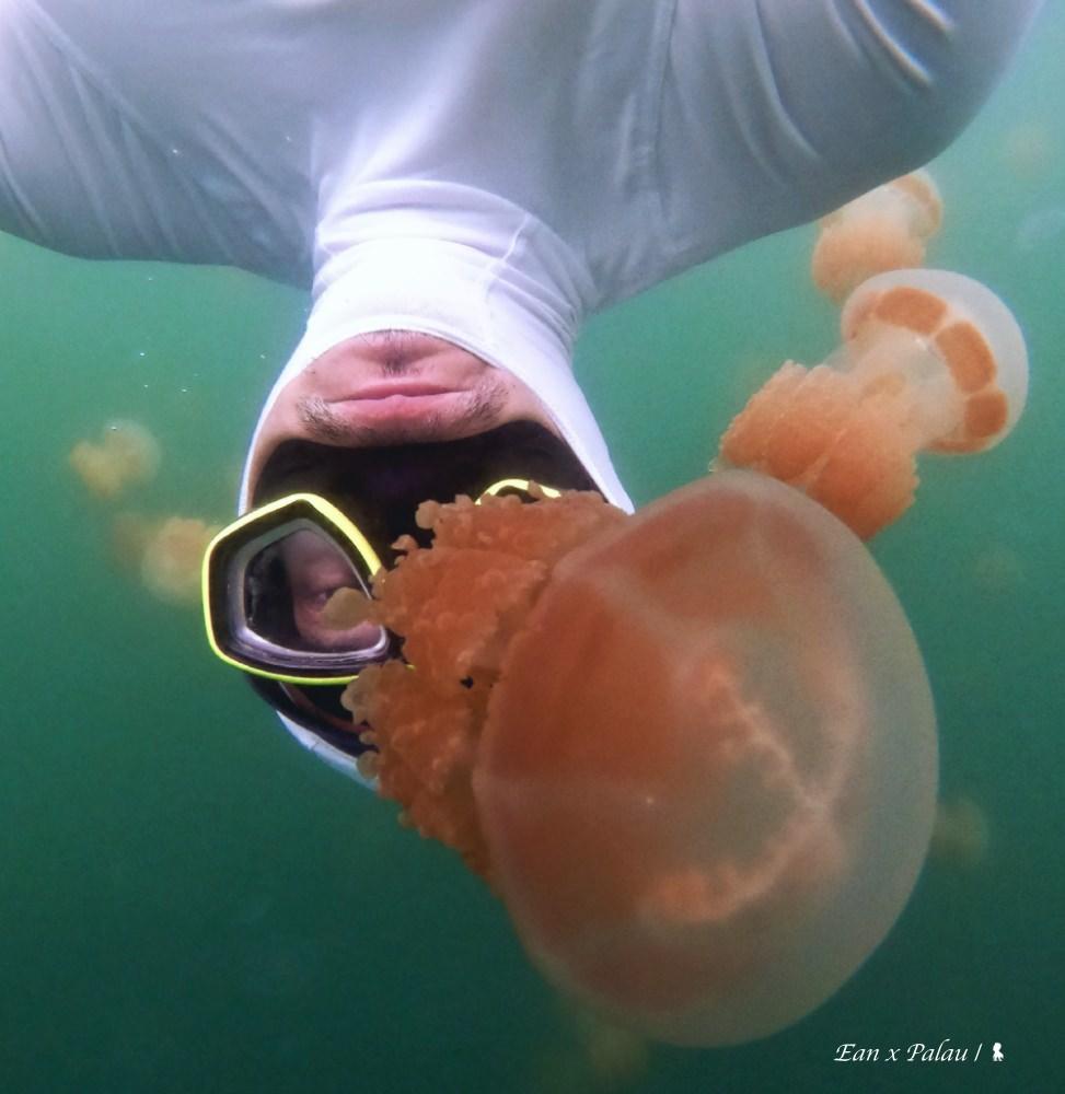 五處帛琉水下景點  帶你直擊上帝的水族箱