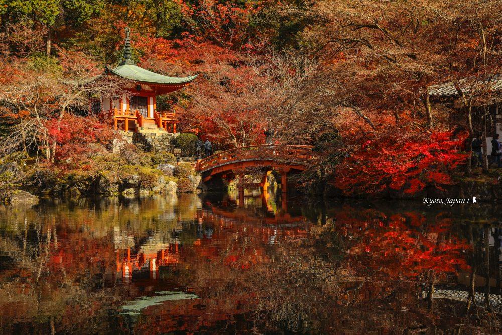 京都紅葉見頃  從味蕾出發,走入最美金秋!
