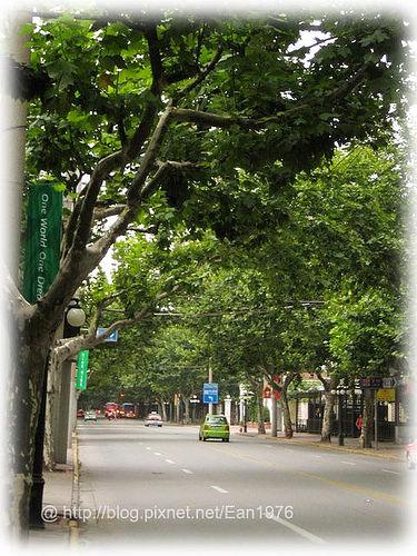 中國首發團之奧運上海行 – 到衡山路看法國梧桐樹