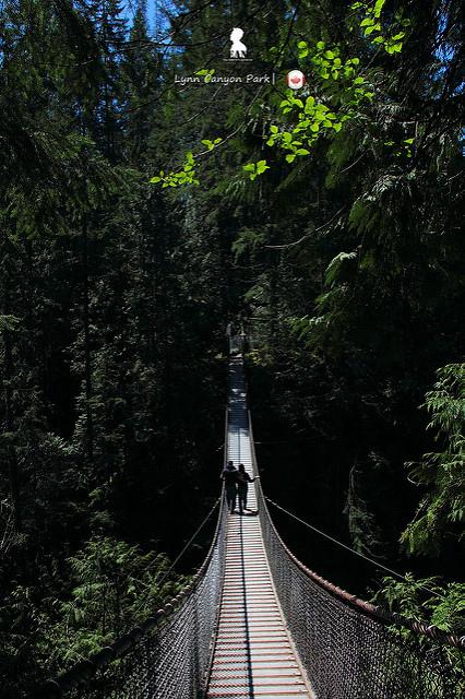 溫哥華自然不用錢  推無料登百年吊橋的林恩峽谷公園(Lynn Canyon Park)