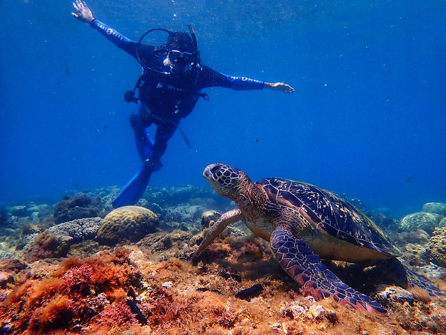 海水美如結晶釉  到阿波島看大海龜與傑克魚風暴奇觀