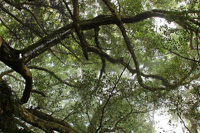 樹會走路的台灣阿凡達聖地:台東鸞山森林博物館