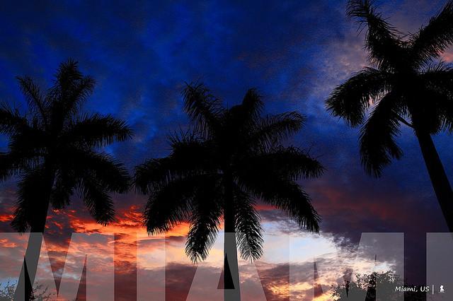 大師的調色盤,色彩超飽和的塗鴉濱海城市:邁阿密